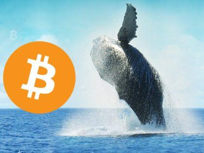 Na giełdę BitMex jednocześnie przesłano 18 000 BTC